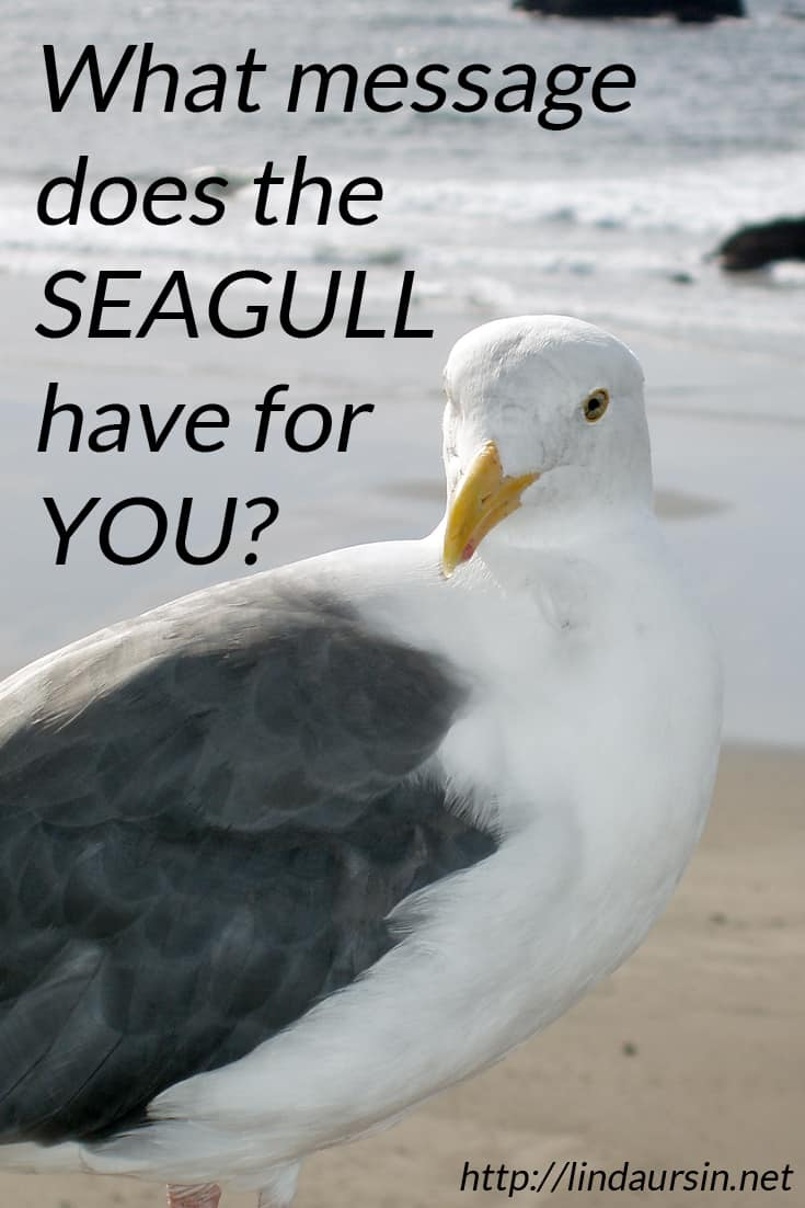 Meet the spirit of the seagull