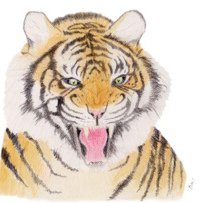 Tiger-brøl