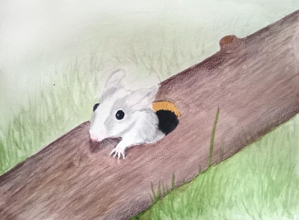 Et akvarell- og fargeblyantmaleri av en grå og hvit mus som kommer ut av et hull i en stokk av Linda Ursin