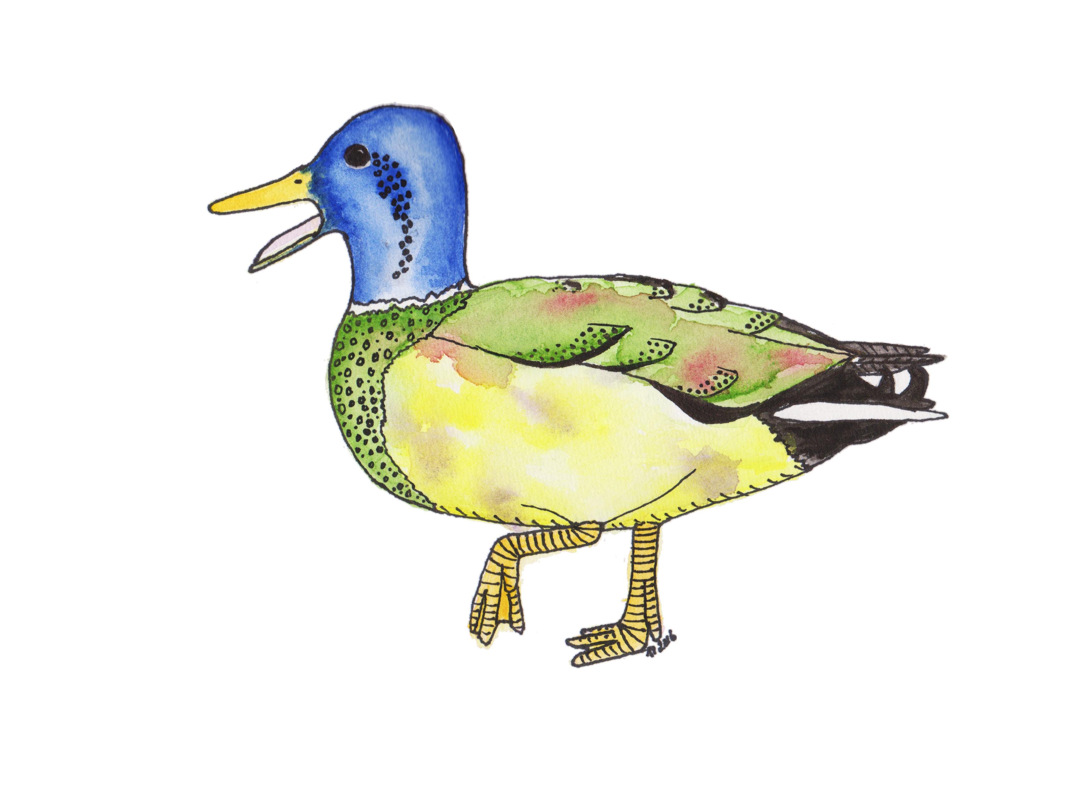 Strange Birds - 11 - Bestemt Spettet Stokkand