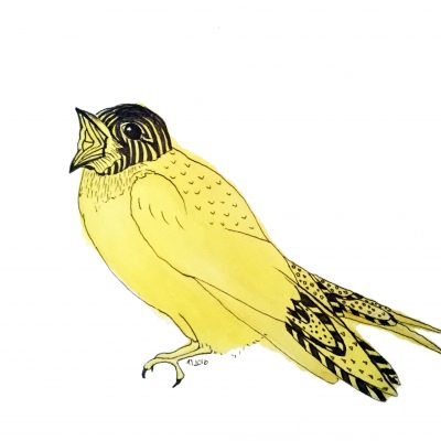 Strange Birds - 6 - Gul Sopran Svale