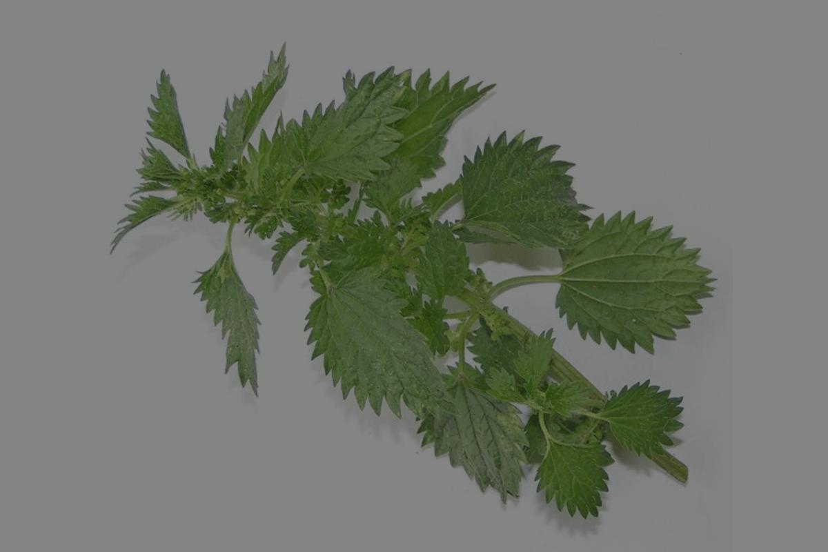 Herblore 101