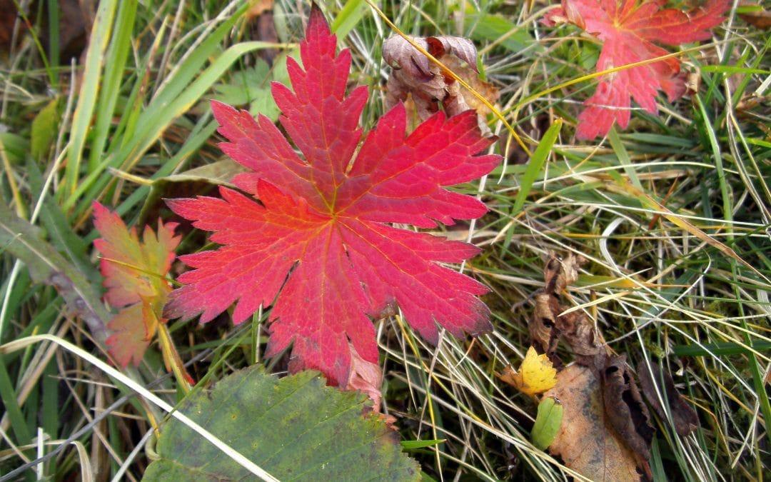 Red leaf Have a Wonderful Equinox (plus Autumn Photos)