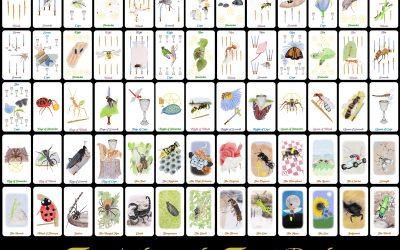 The Arthropoda Tarot Deck is Available
