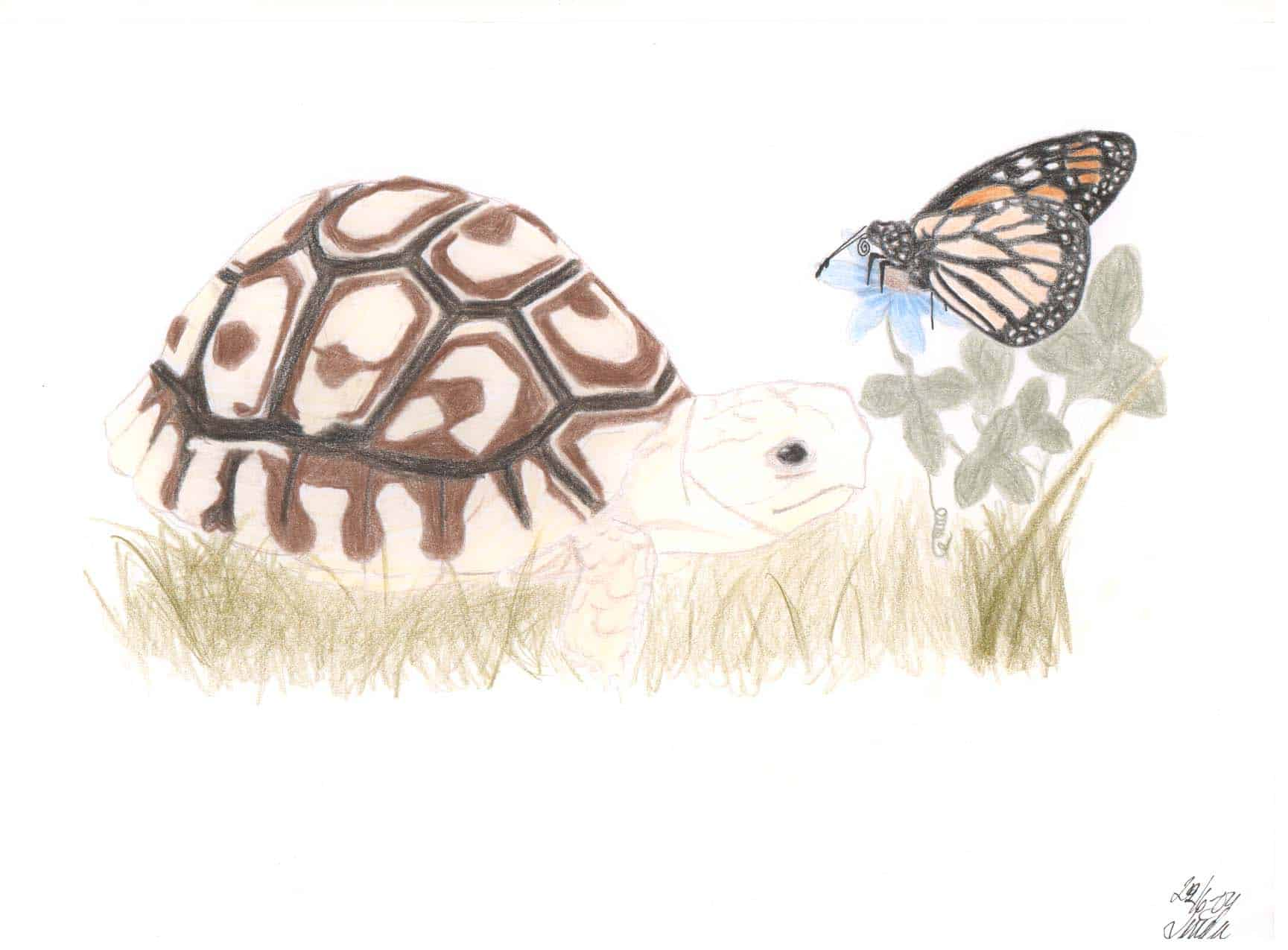 Tortoise and Butterfly