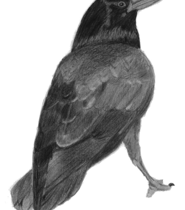 A Raven for Will