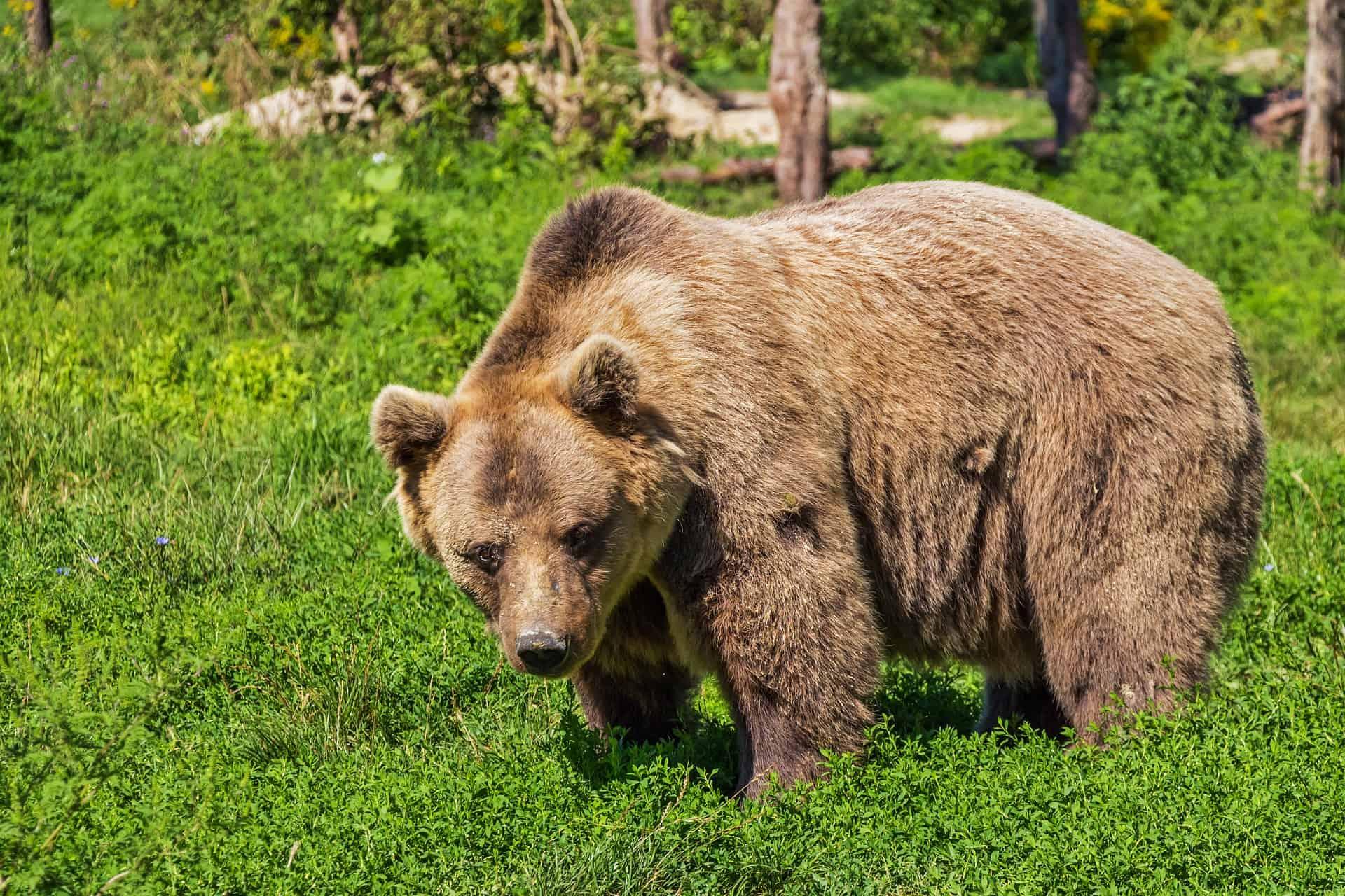 Part Bear?