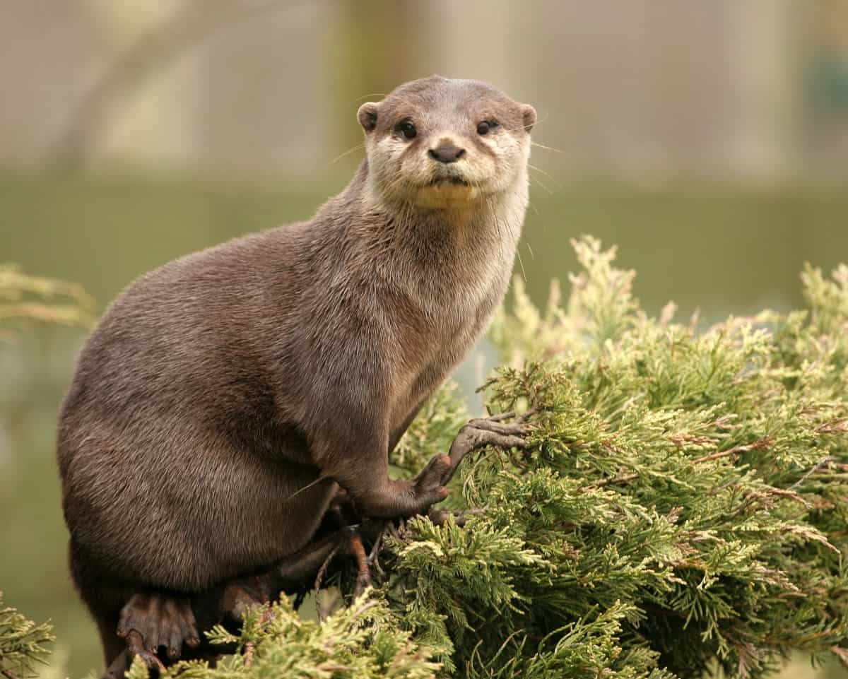 A Meeting with the Otter (one of my spirit animals)