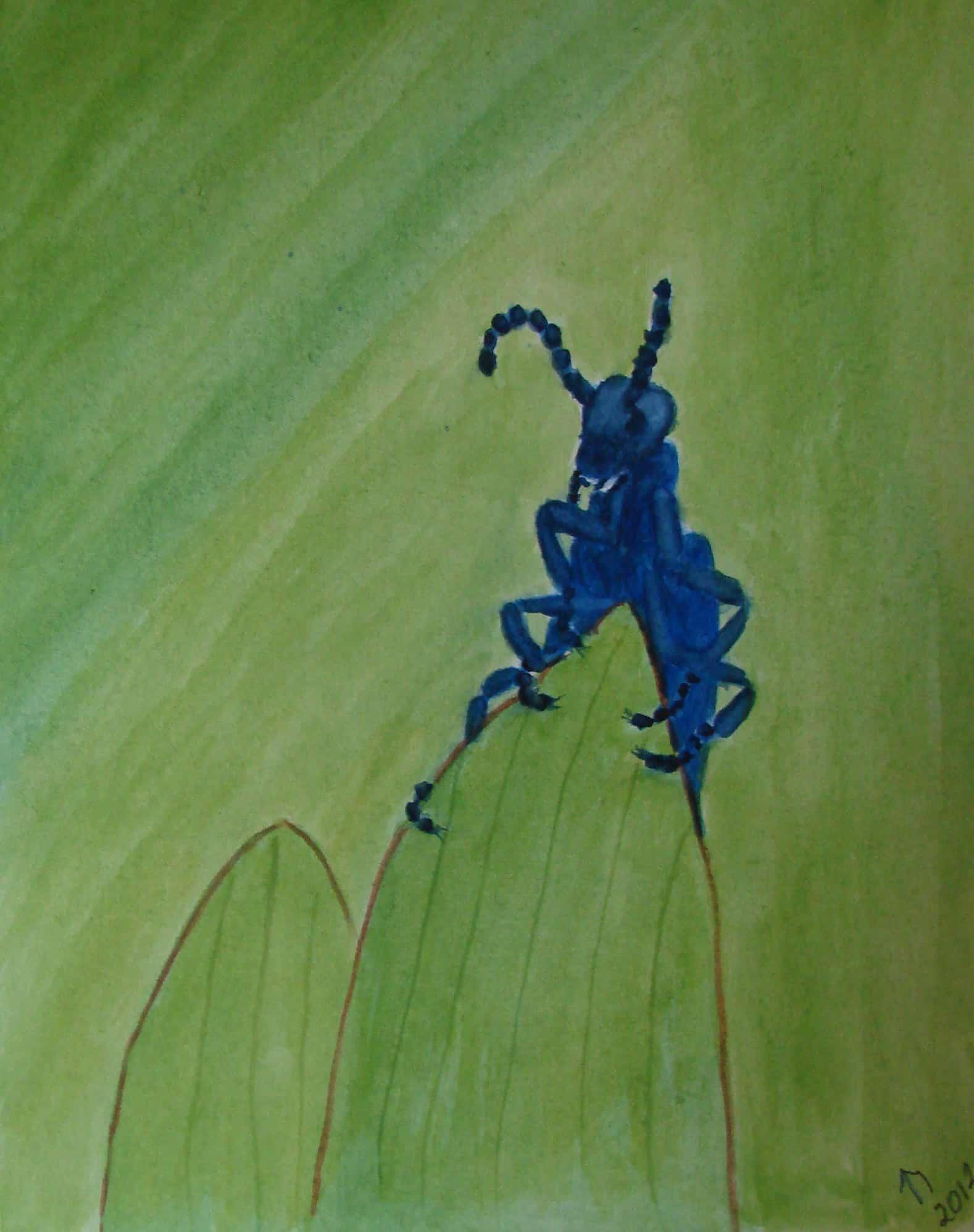 Oil Beetle on a Leaf