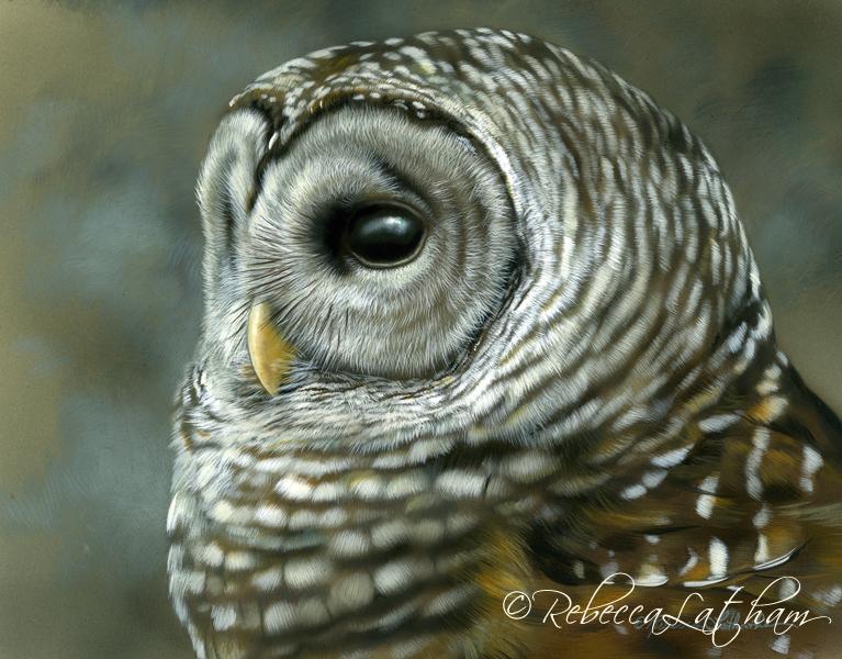 Silence - Barred Owl, by Rebecca Latham