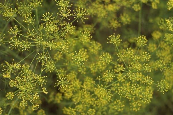 Helping Herbs – Keeping you healthy