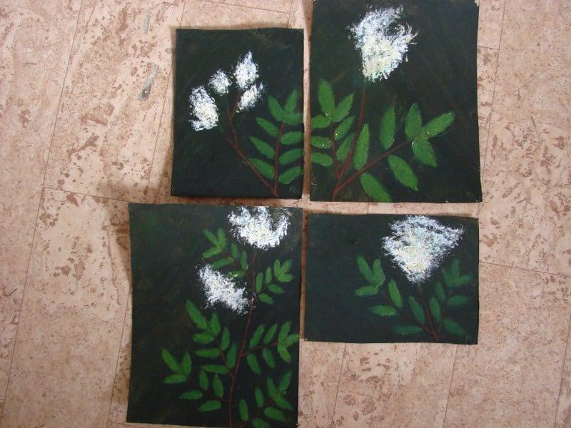 Meadowsweet x 4