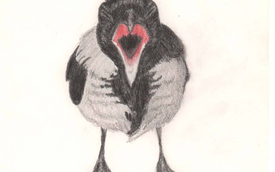 A hungry Crow