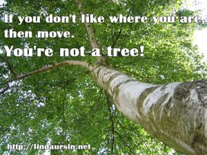 You're not a tree Sassy Sayings