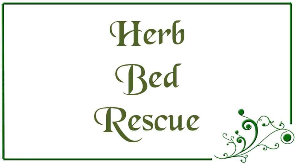 Herb Bed Rescue