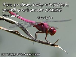 If you are always trying to be... Sassy Sayings, bug style https://lindaursin.net #quotes #sassysayings