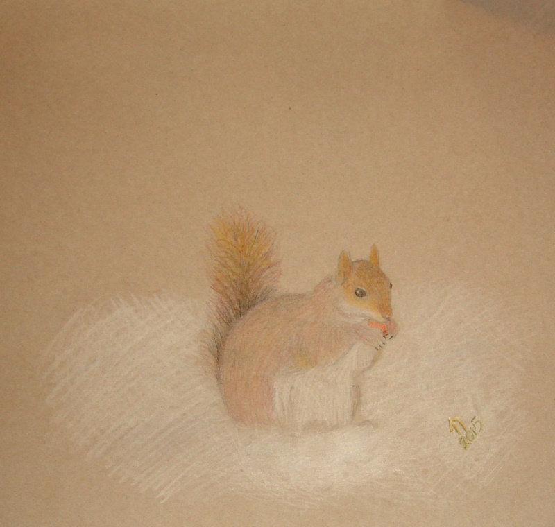 Drawing of a squirrel