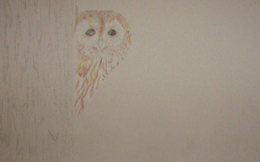 Tawny Owl Peek-a-boo