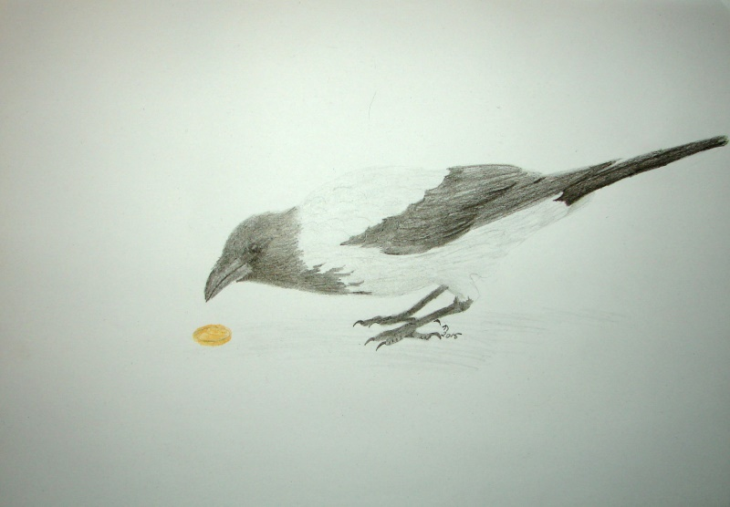 Drawing of a hooded crow looking at a coin