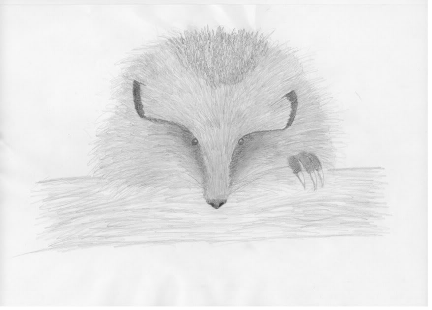 Pencil drawings of spirit animals