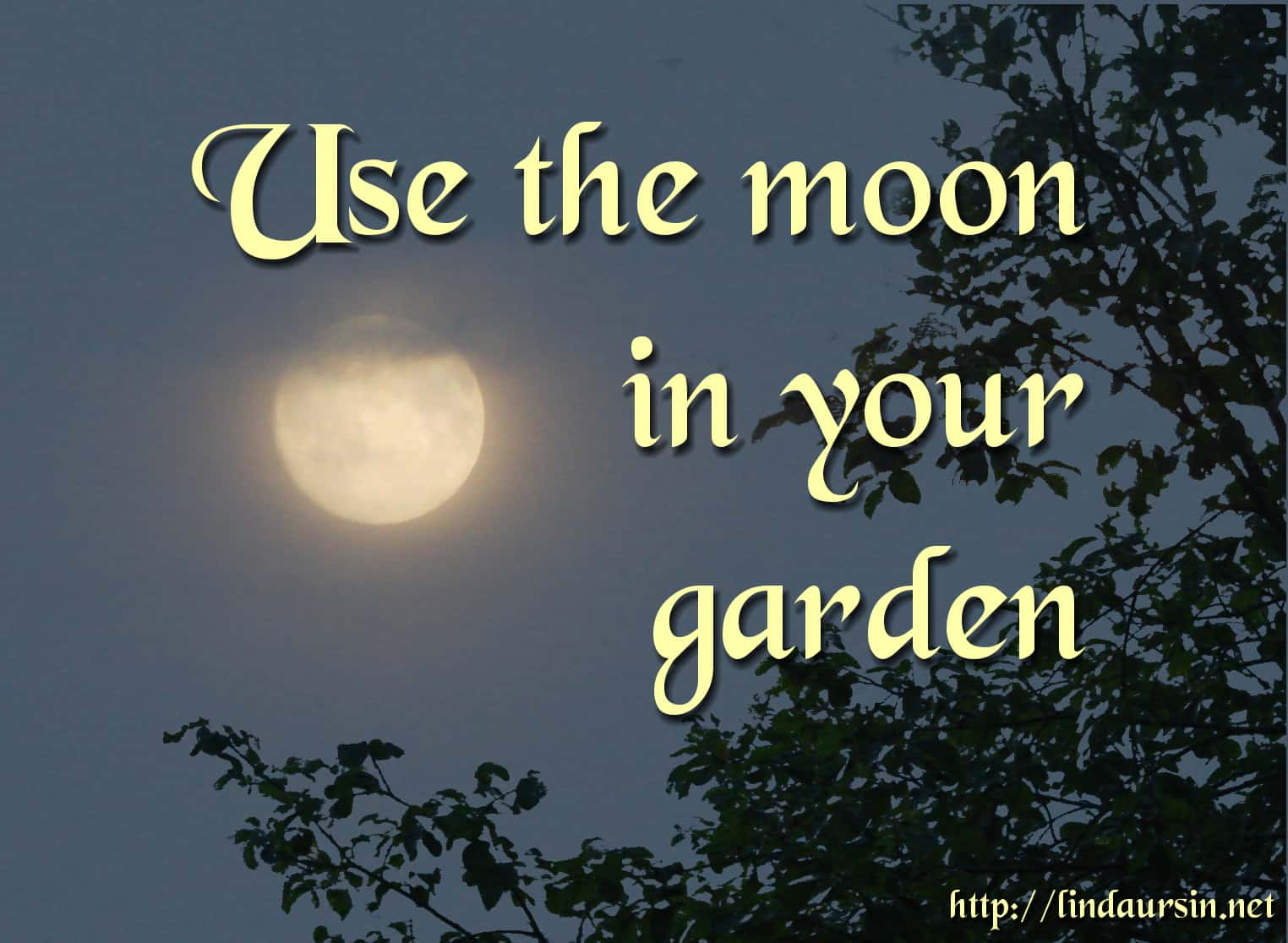 Use the moon in your garden