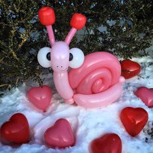 Balloon snail