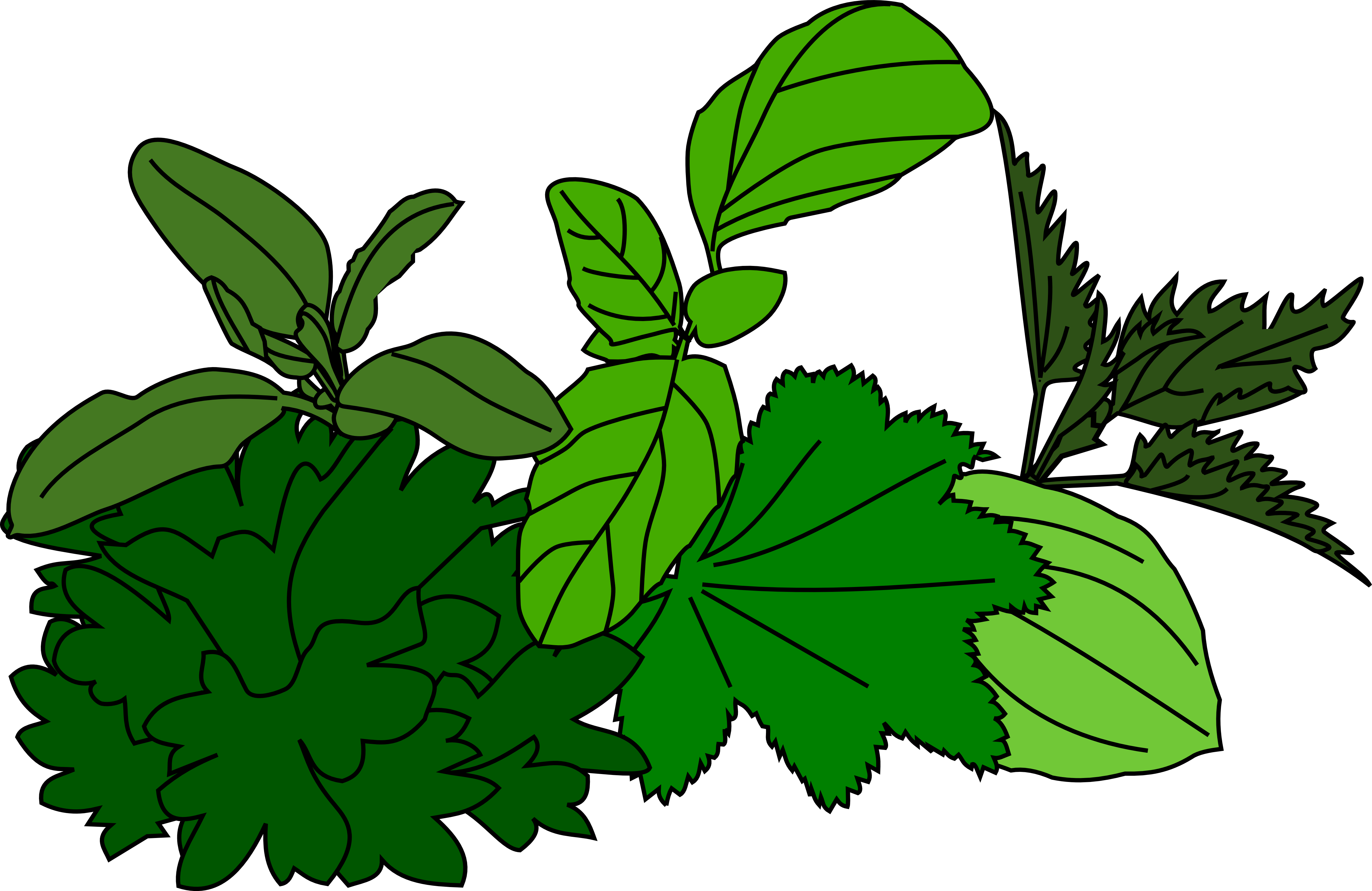 Coloring Herbs