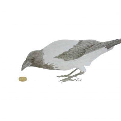 Curious Crow