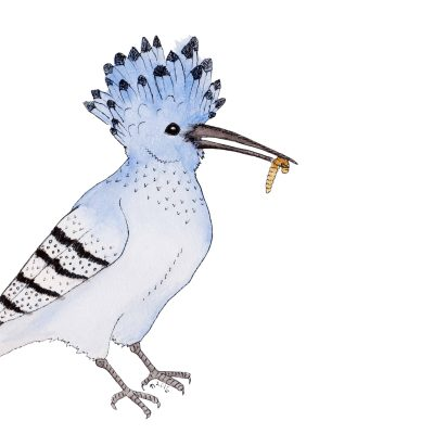 Strange Birds 12: Hungry Azure Hoopoe by Linda Ursin