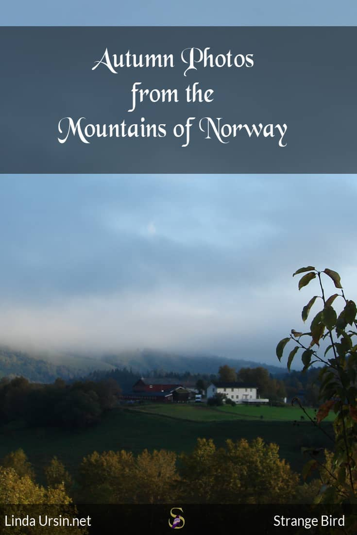 Autumn photos from the mountains of Norway