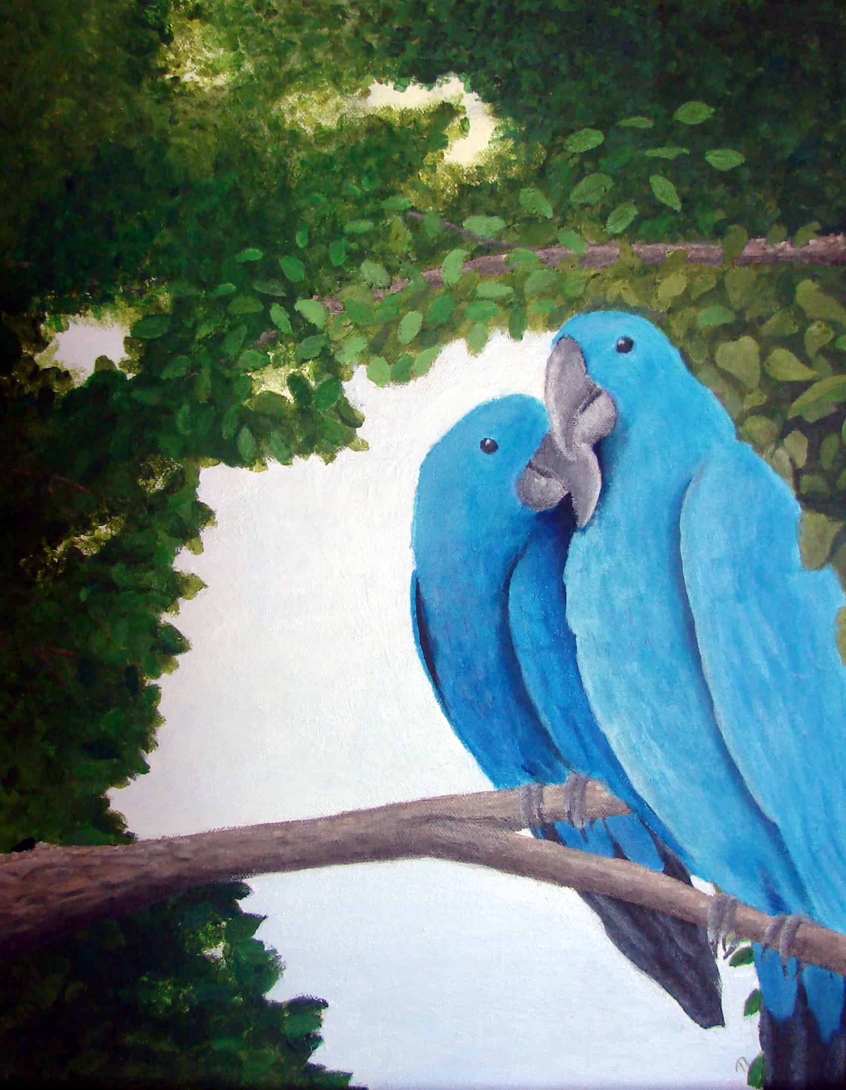 Macaws in Love - Commissioned Artwork