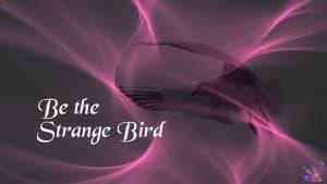 Be the Strange Bird - Computer