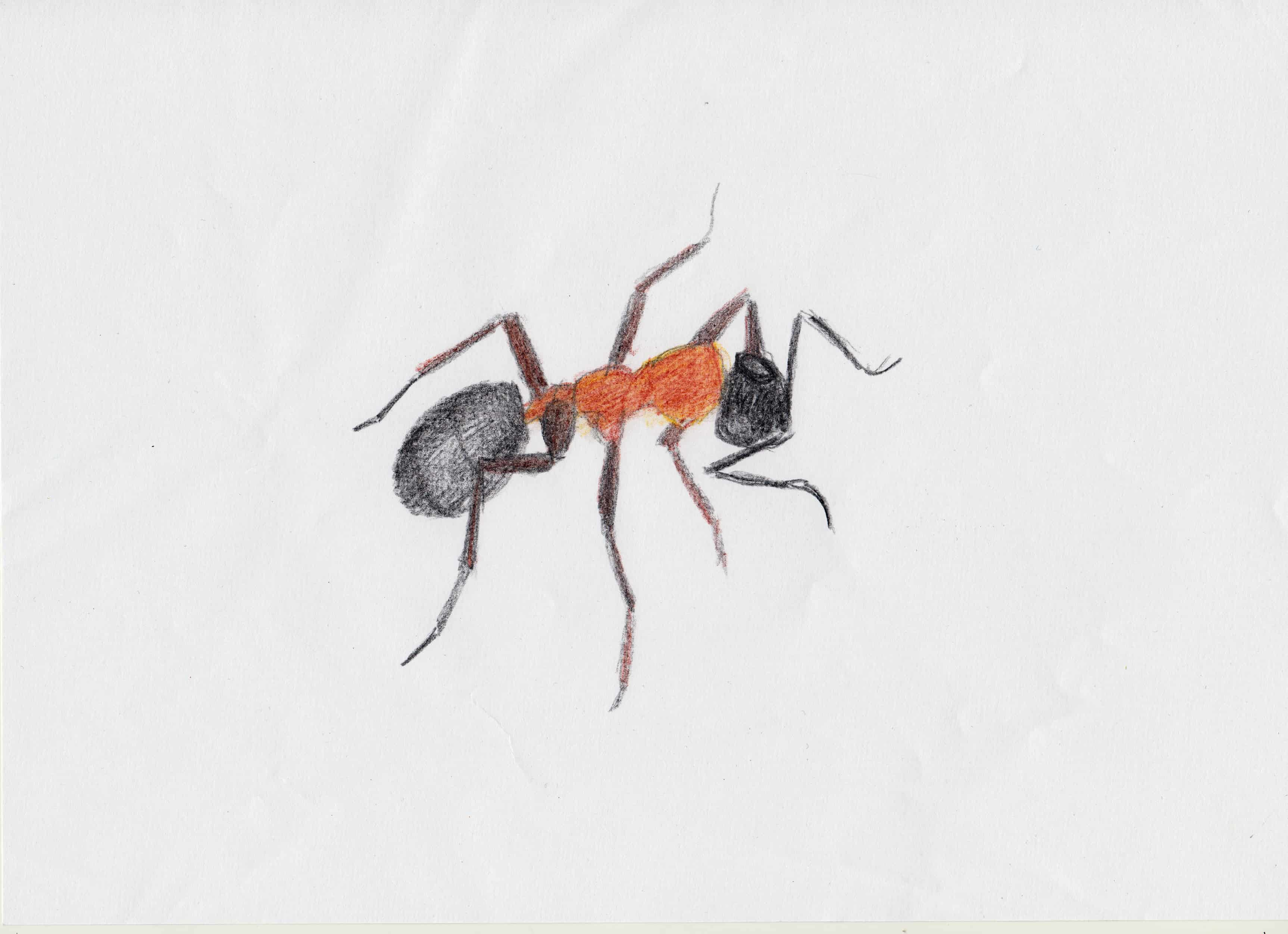 Uncategorized Drawing Of An Ant arthropoda tarot deck by linda ursin 3 of wands drawing an ant 1