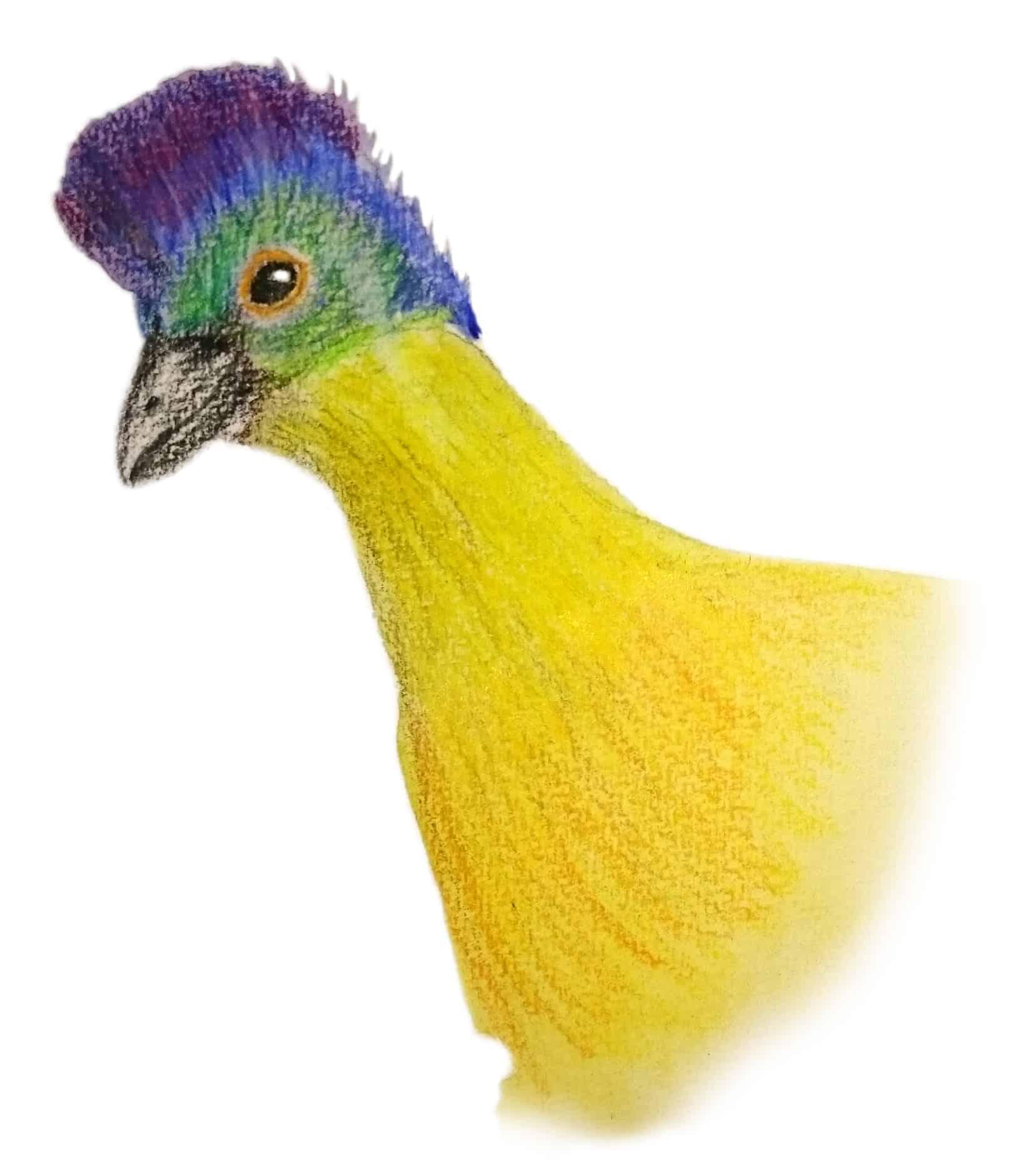 Turacao bird