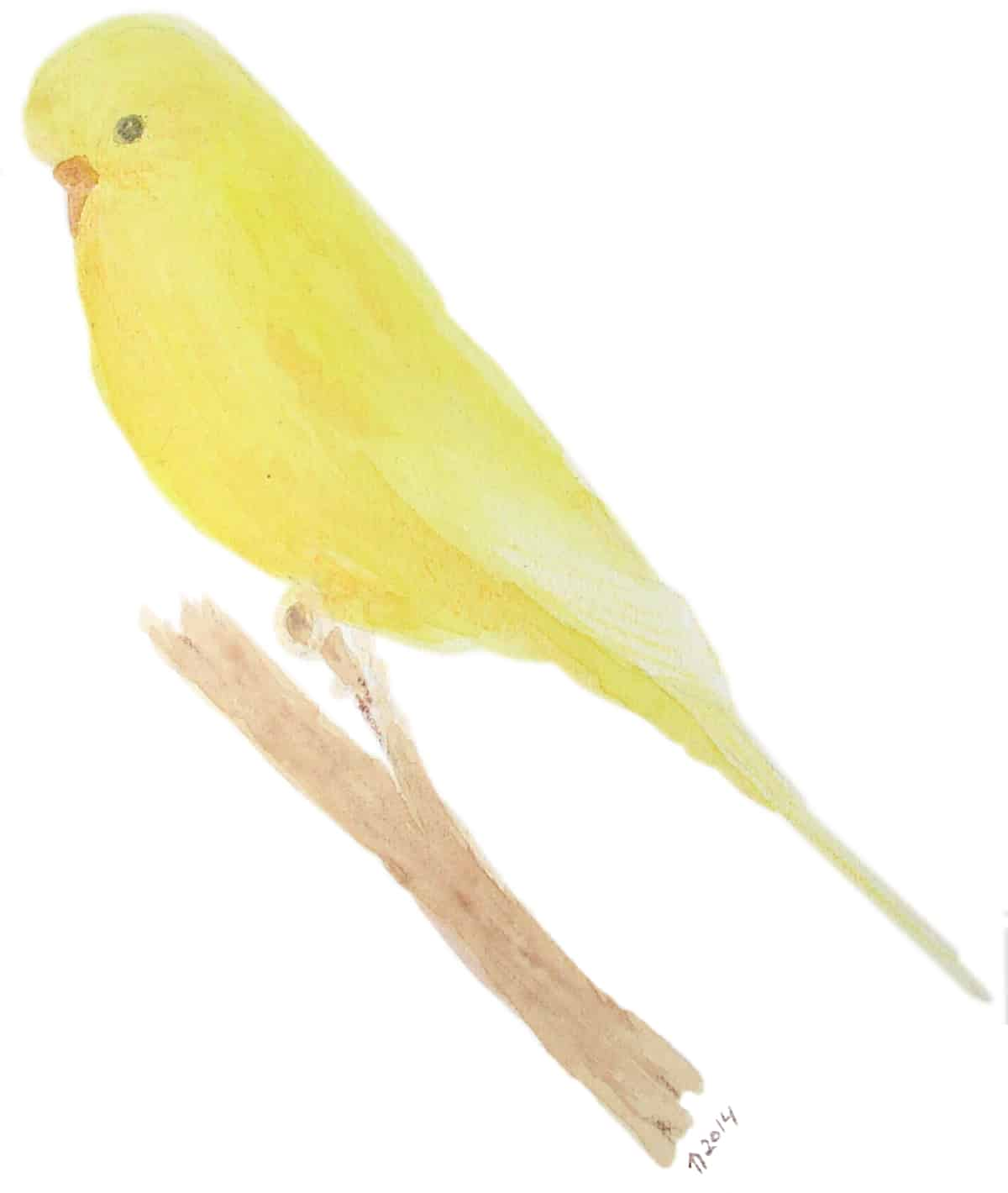 Tracey, the last budgie of the four