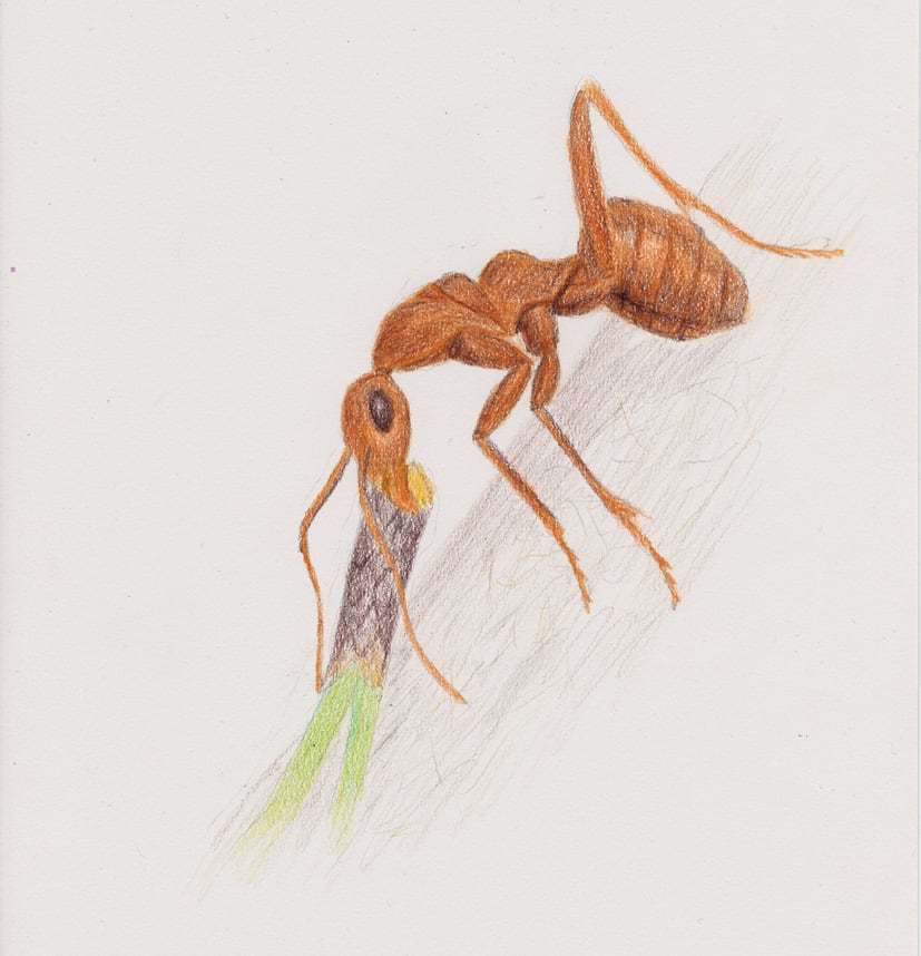Drawing an Ant dragging something up a hill