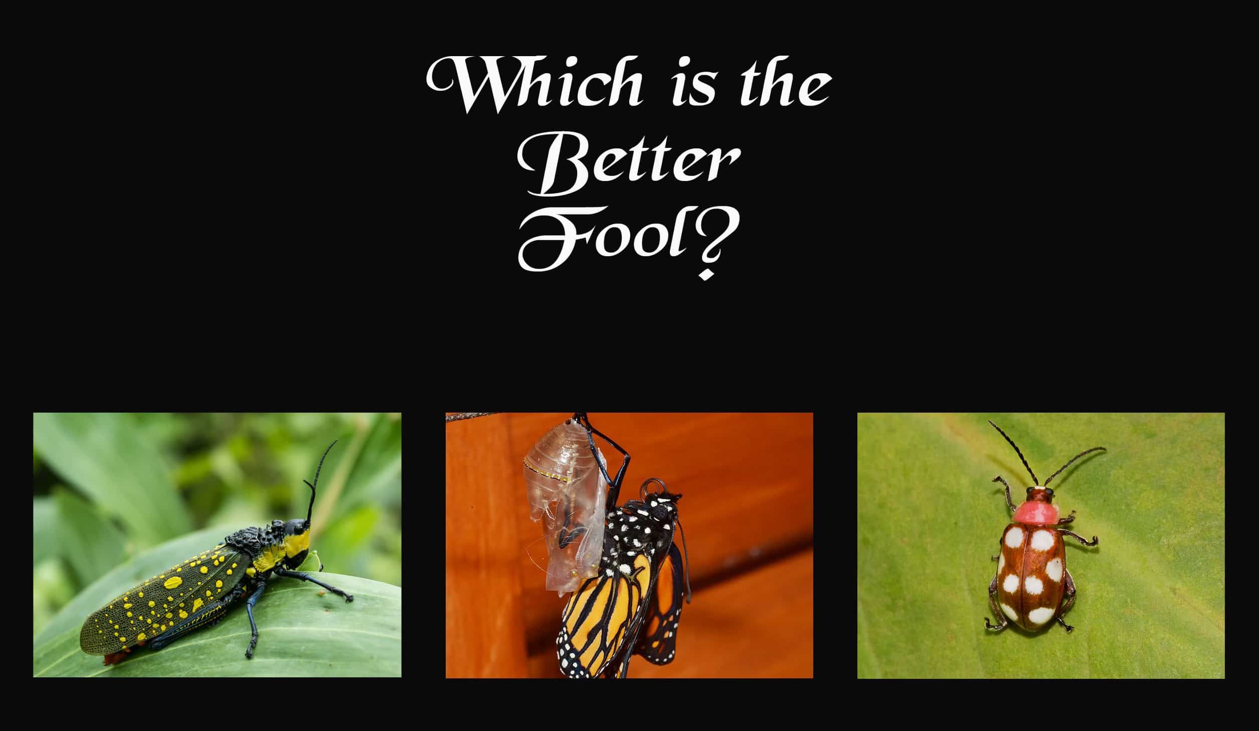 Cast your vote for which bug should be the Fool