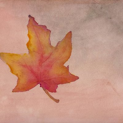 Maple Leaf in Autumn - Paintings and drawings of all kinds of plantlife. Primarily inspired by flora from Scandinavia, medicinal herbs, and the plants in my own garden