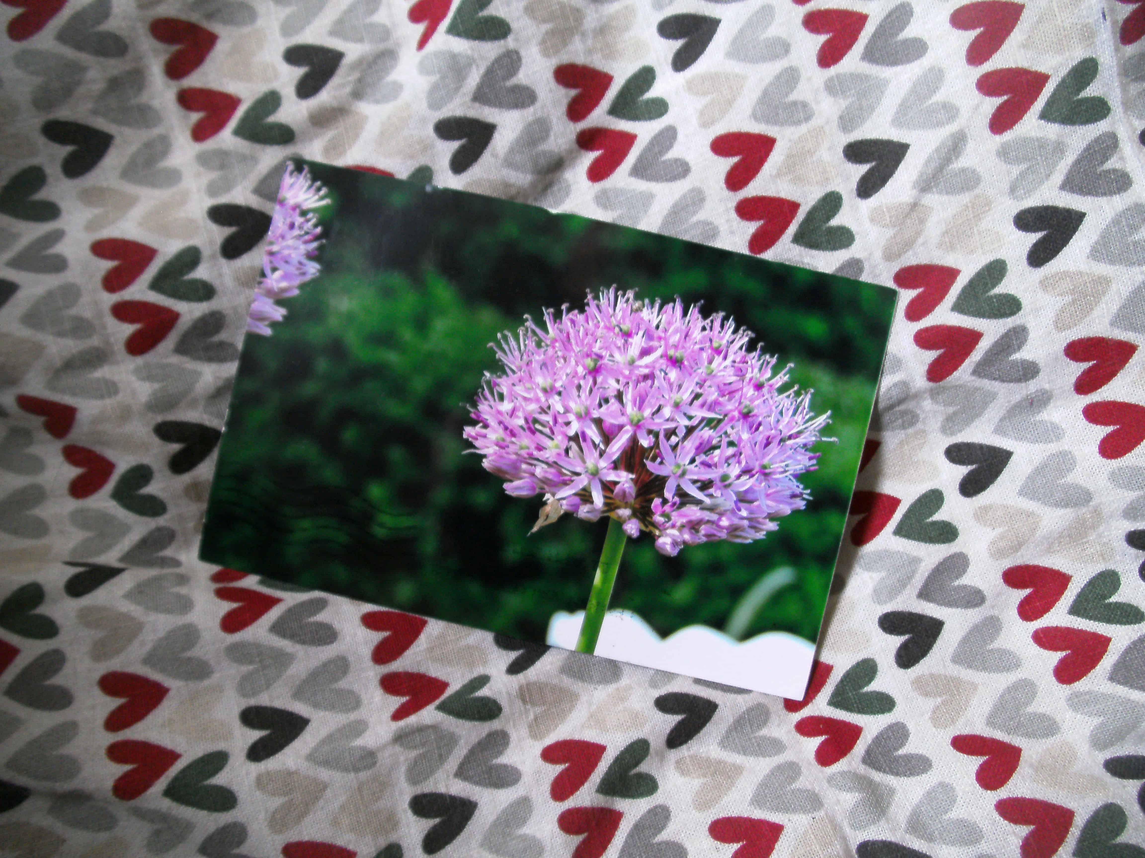 Foto of a flower by Lynne Foerster, USA