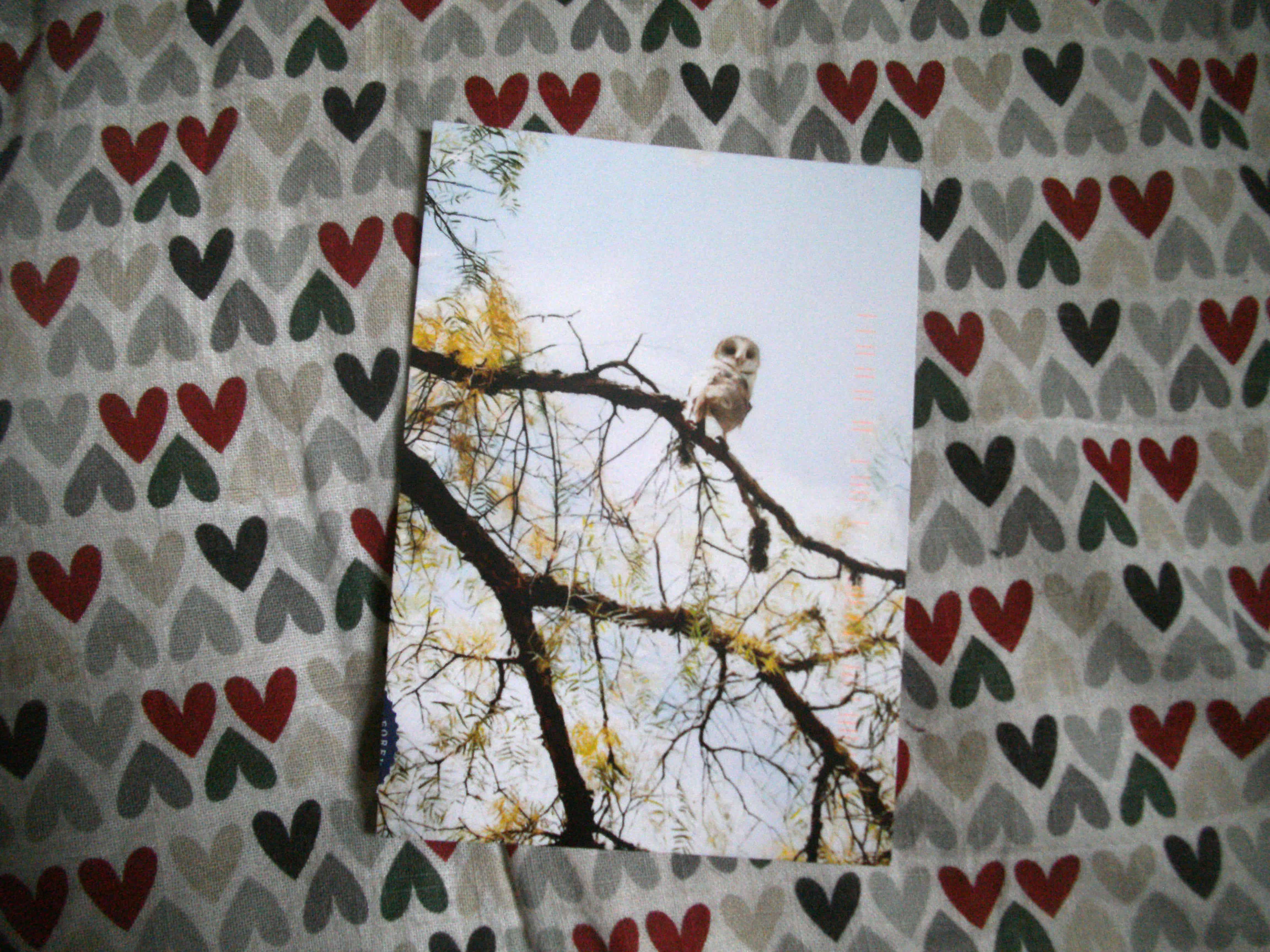Owl photo by Janice Darby, USA