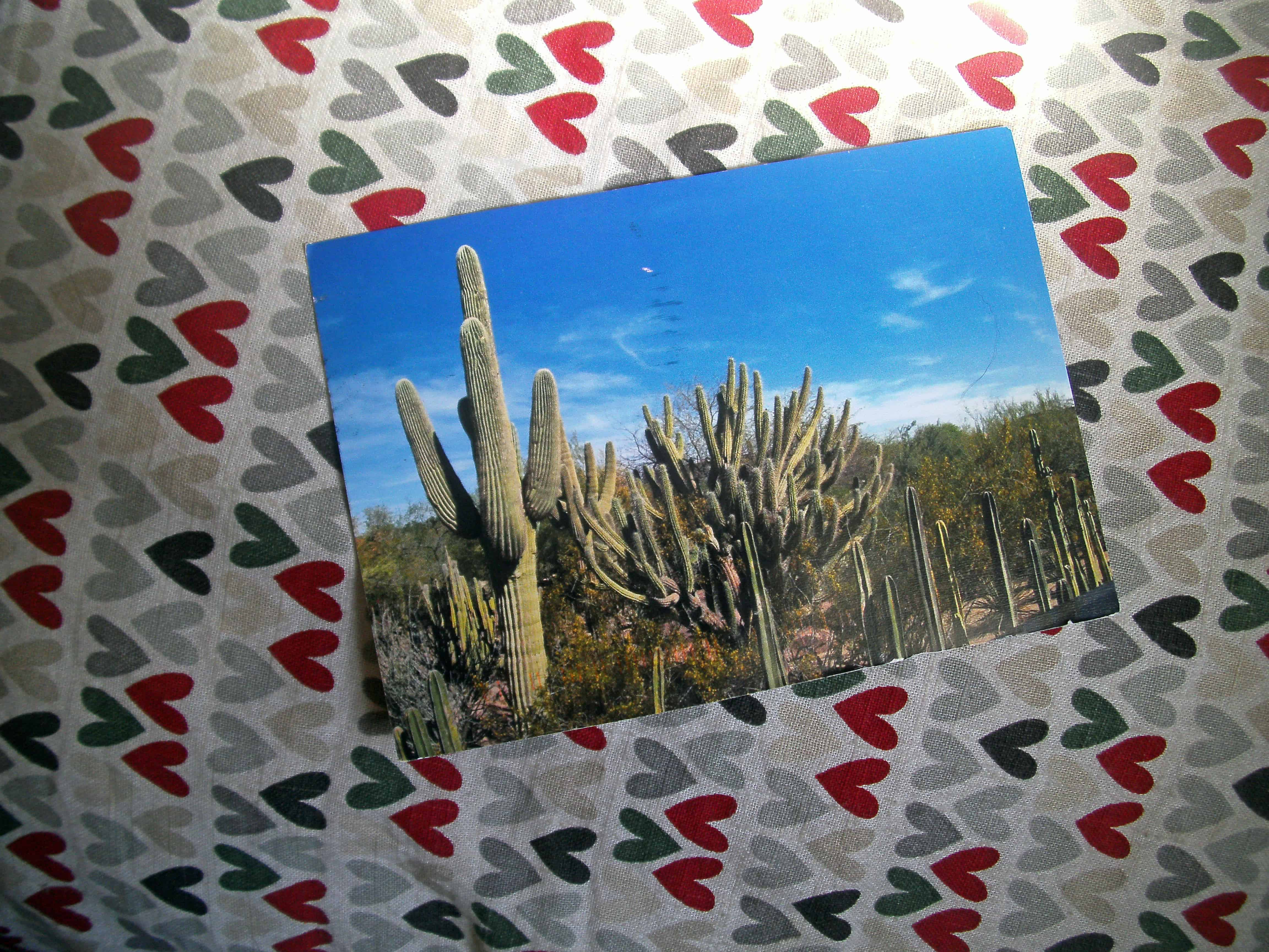 Desert Botanical Garden by Deanie Houghtaling, USA