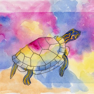 Painted Turtle - Watercolour painting by Linda Ursin