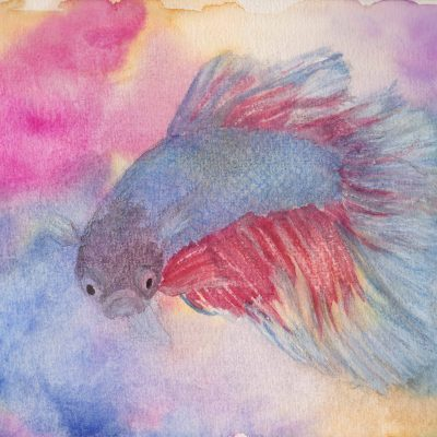 Fighting Fish - Watercolour and coloured pencil artwork by Linda Ursin