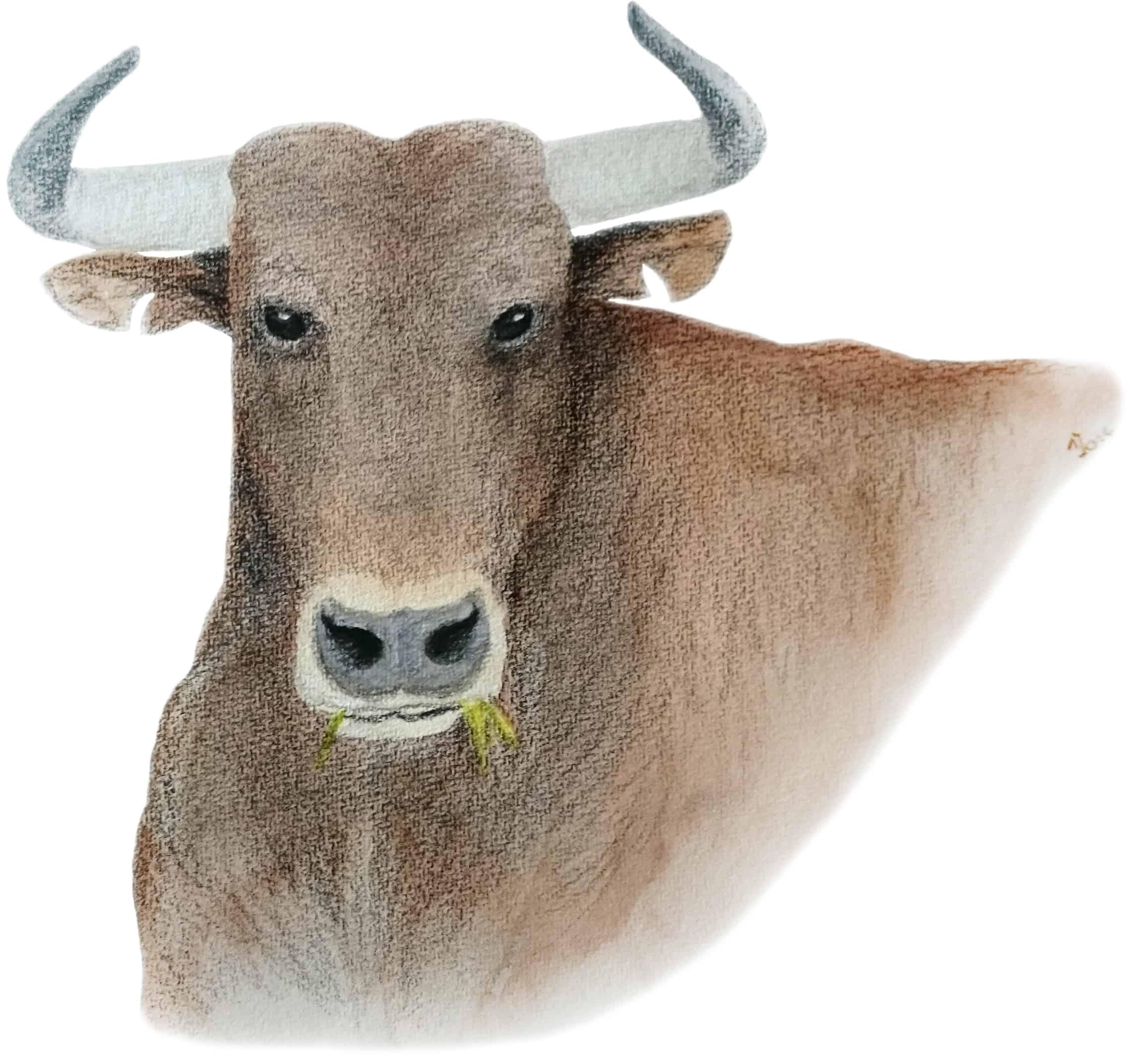 bull-ren