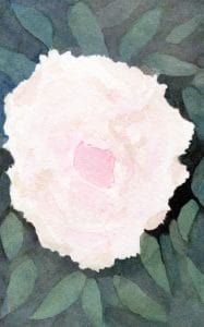 Peony - watercolour painting by Linda Ursin