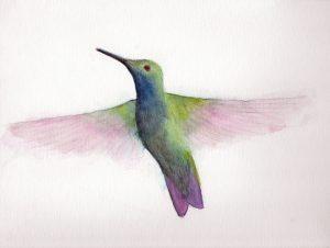 Hummingbird watercolor painting by Linda Ursin