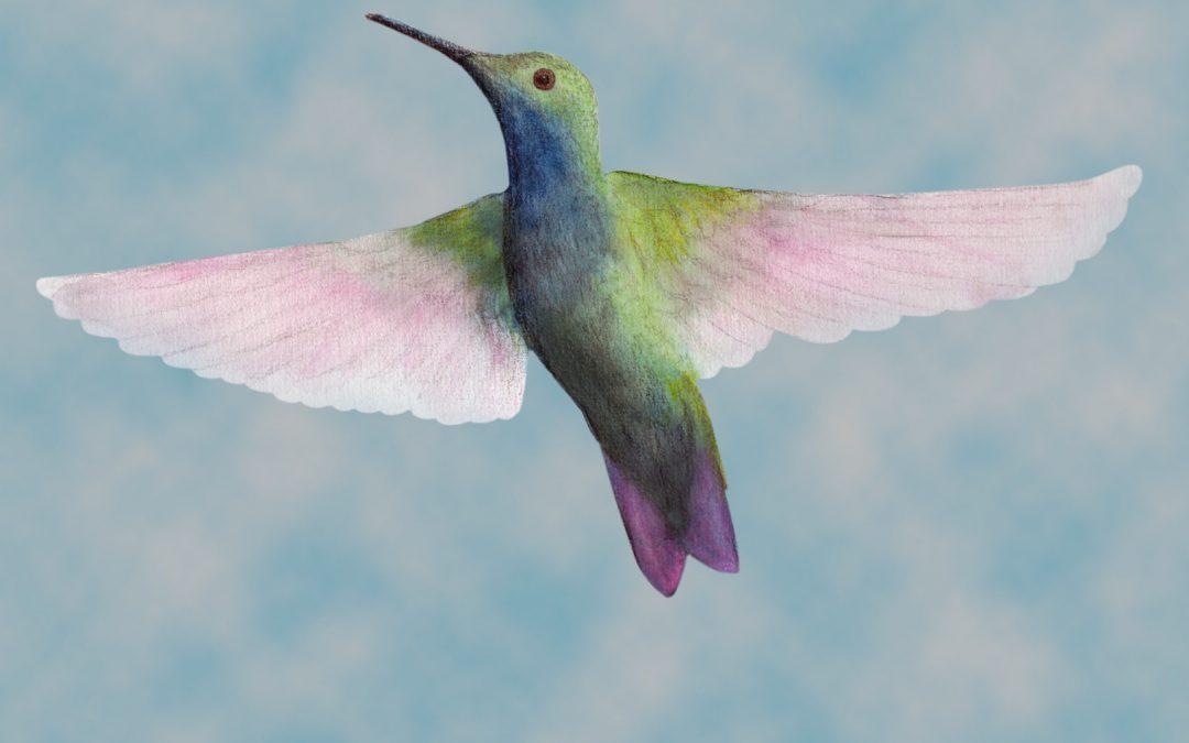 Hummingbird Facts, Folklore and Spirit Animal Info