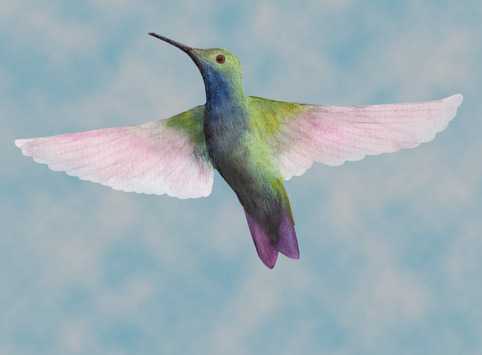 Hummingbird Facts, Folklore and Spirit Animal Info