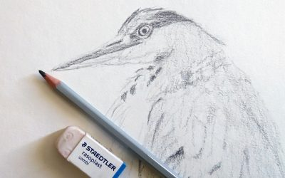 Finishing a bird drawing and some updates