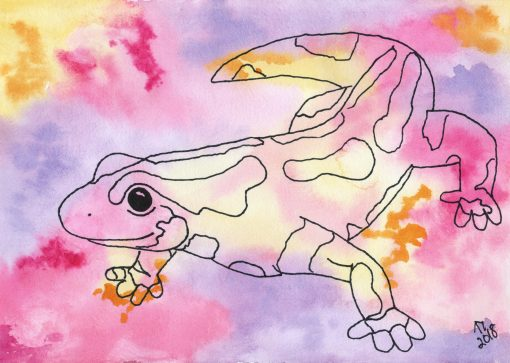 Colourful Salamander